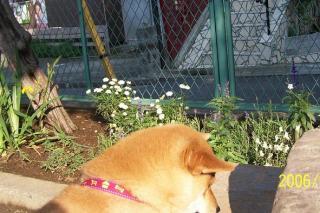 お花も草も、美味しいな。ち、違う!