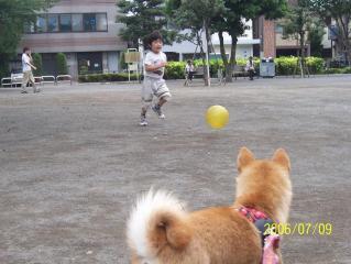 ボール遊びしたい