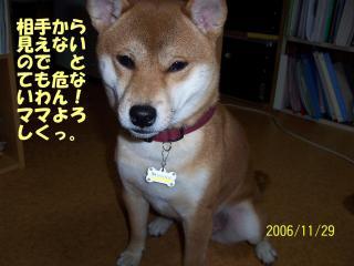 000_0519_1.jpg