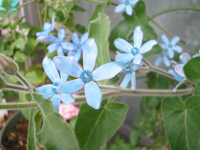 s-bluestar3.jpg