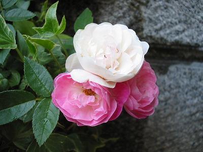 s-pink.jpg