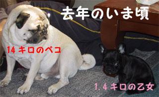 2005.5.1-1jpg.jpg