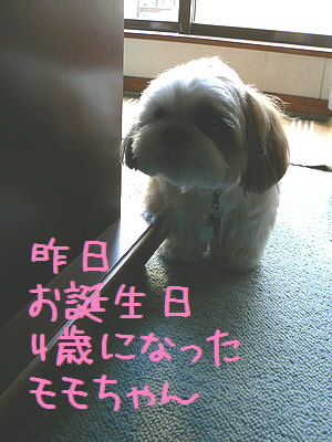 モモちゃん