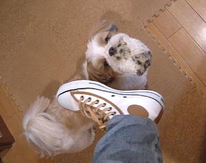 げっとな靴