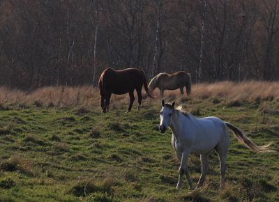 horse305