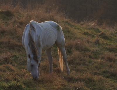 horse306