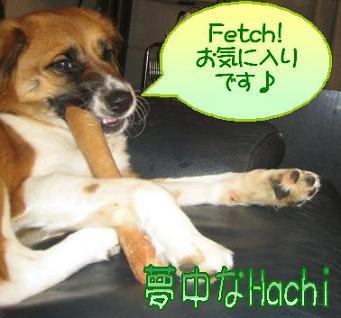 Hachiのマイブーム