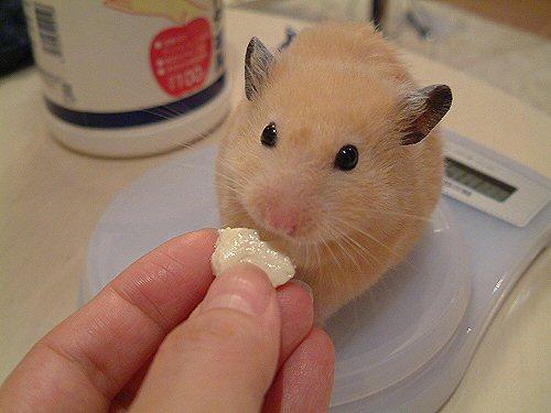 お豆腐(゚д゚)ウマー