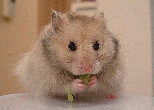 食べ物は食べるさっ