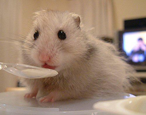 ぼくも食べるょ