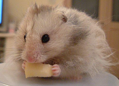 ハーモニカ食べでちゅょ