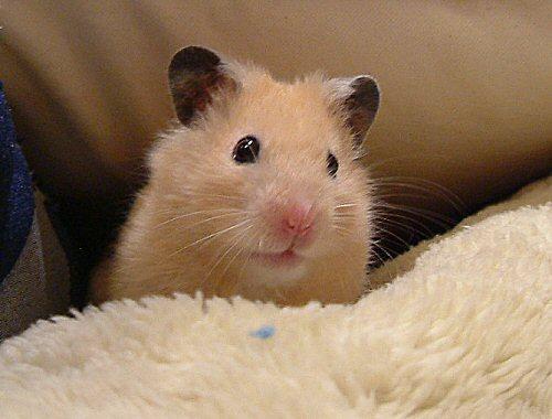 ぼくは納豆も大好きだょ