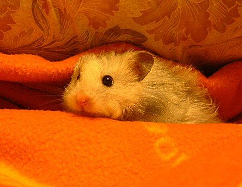 ぼくも毛布で遊ぶんだ