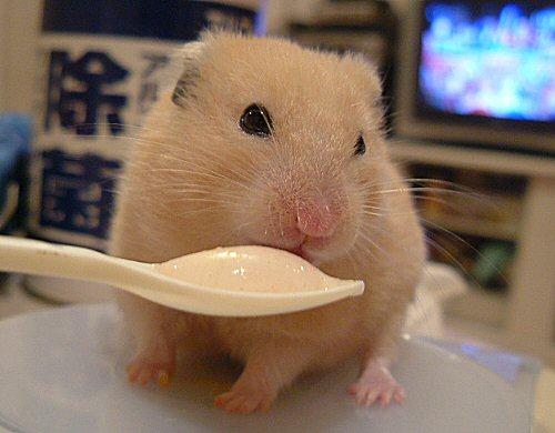 ヨーグルト食べるだちゅょ
