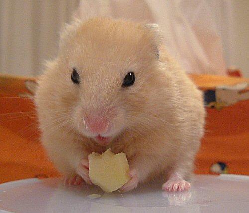 りんごを食べて?