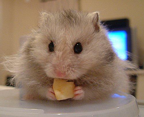 りんごなら食べるんだっ