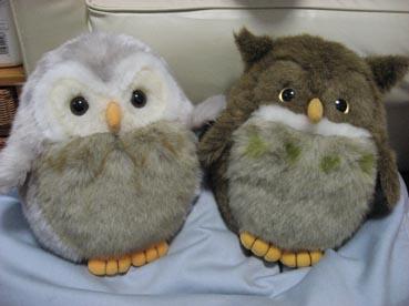 abashiri-owl.jpg