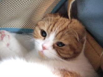 2007_0104okinawa0114.jpg