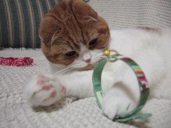 2007_0124okinawa0209.jpg