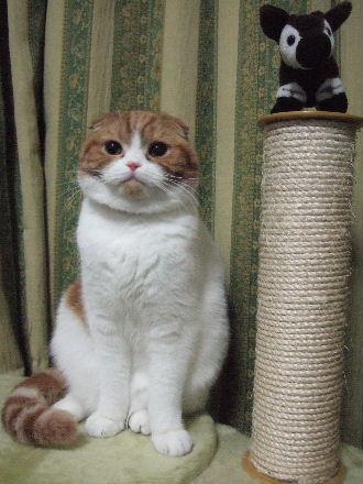 2007_0203okinawa0240.jpg