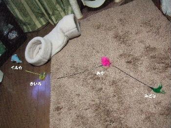 2007_0223okinawa0159-1.jpg