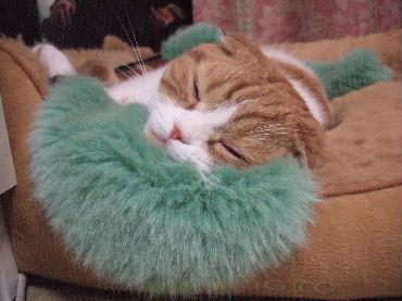 2007_0501okinawa0309.jpg