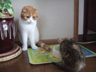 2007_0512okinawa0001.jpg