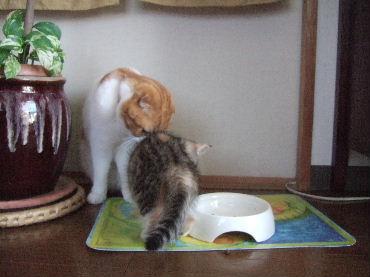 2007_0512okinawa0002.jpg