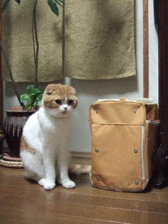 2007_0521okinawa0116.jpg