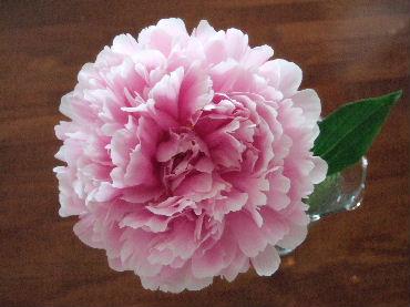 2007_0526okinawa0211.jpg