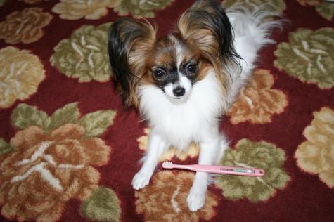 歯磨き大好き♪