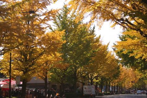 甲州街道の銀杏並木