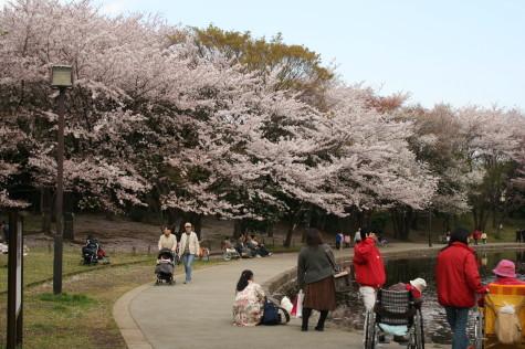 桜も咲いてたよ