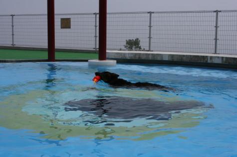 正しい泳ぎ方