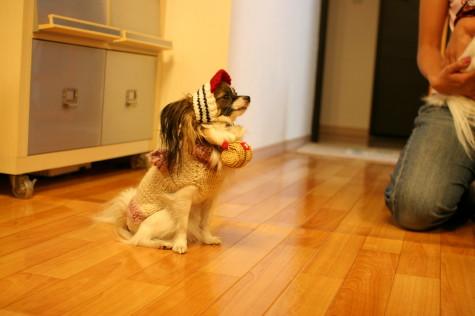 救助犬2号