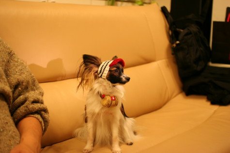 救助犬3号