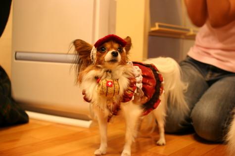 救助犬1号