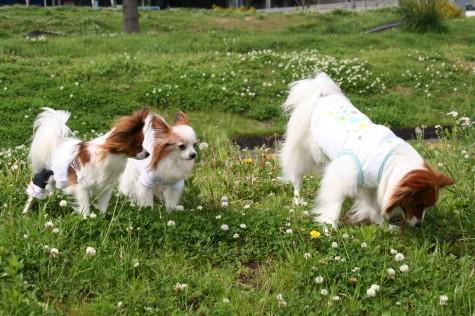 牧草犬の集団