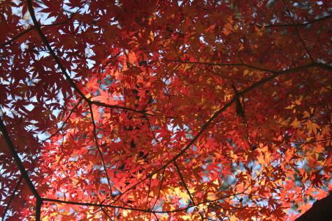 有栖川公園の紅葉