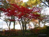 山中湖紅葉中
