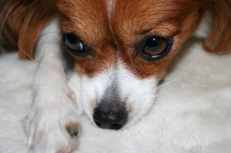 お鼻の横の茶色のチョンチョンが好き☆