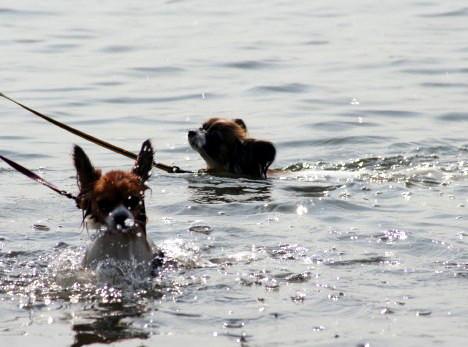 泳ぐor溺れる