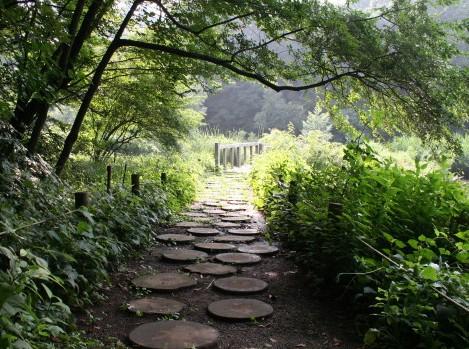 自然教育園の小路