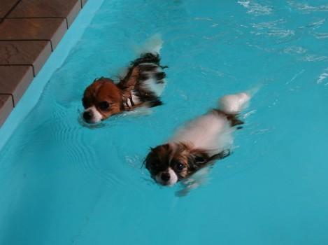泳げるよ♪