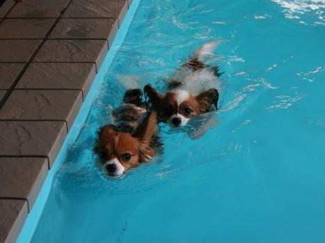 初泳ぎのコブちゃんと一緒に