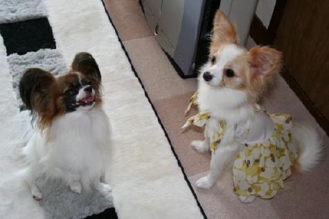 ラヴィ&marronちゃん