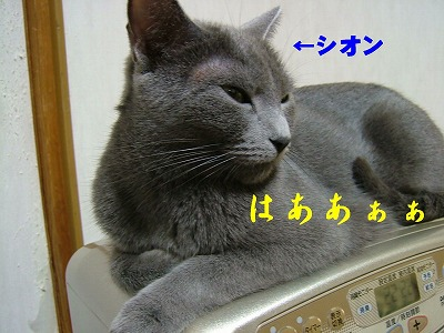 2007031501