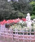 砧公園バラの庭