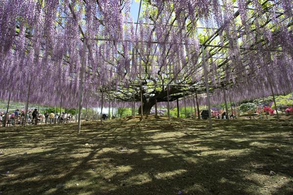 ashikaga_7630.jpg
