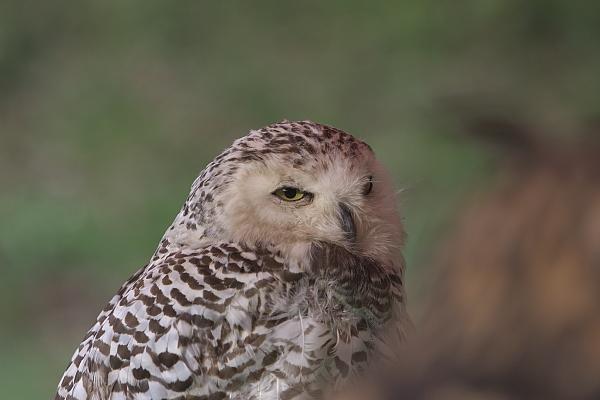 bird1_4808.jpg